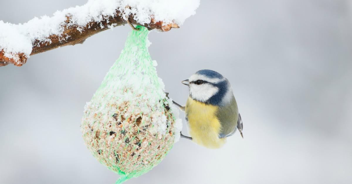 Vogel-bij-vogelvoer