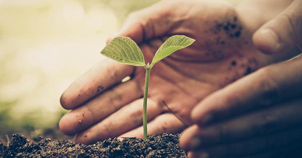 Aanplanten & plantverzorging