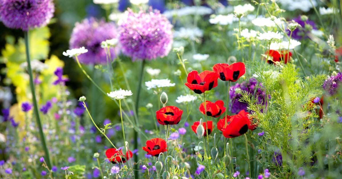 bloemen-in-border