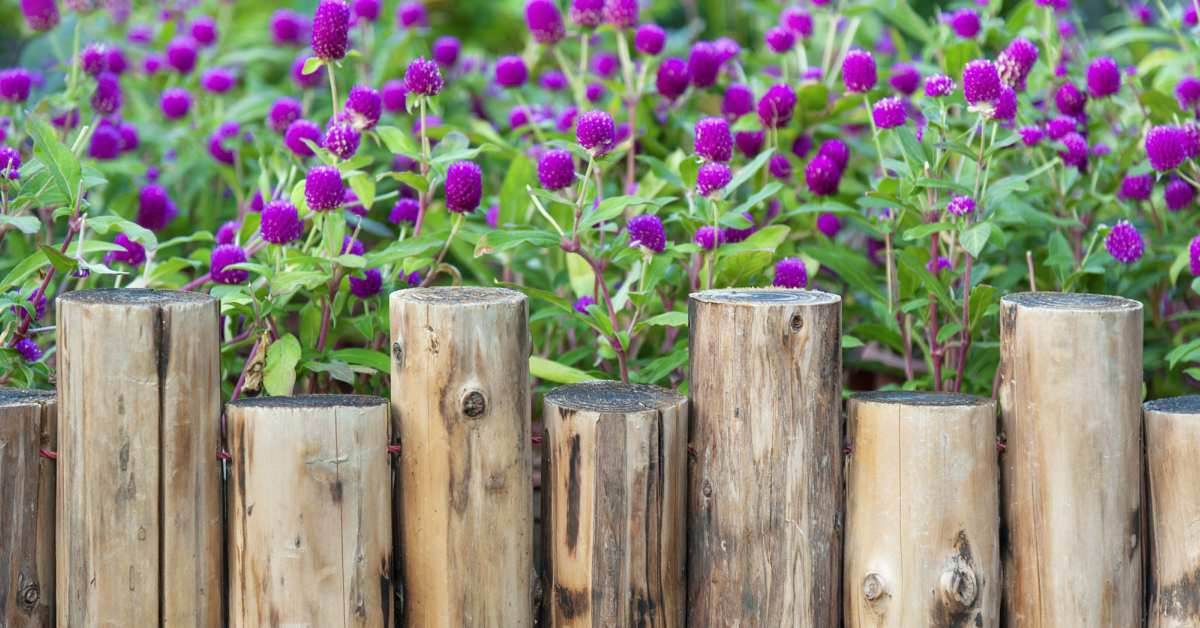 Border-met-planten