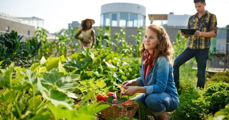 De leukste tuinworkshops in Nederland
