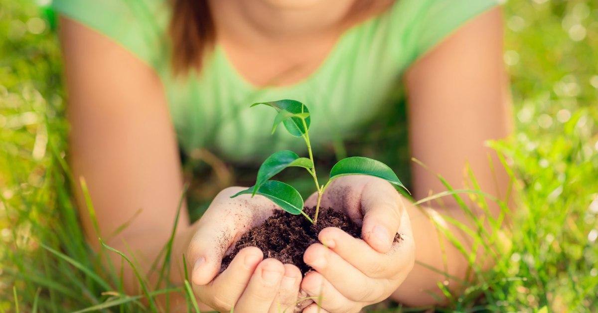 Mooie-plant
