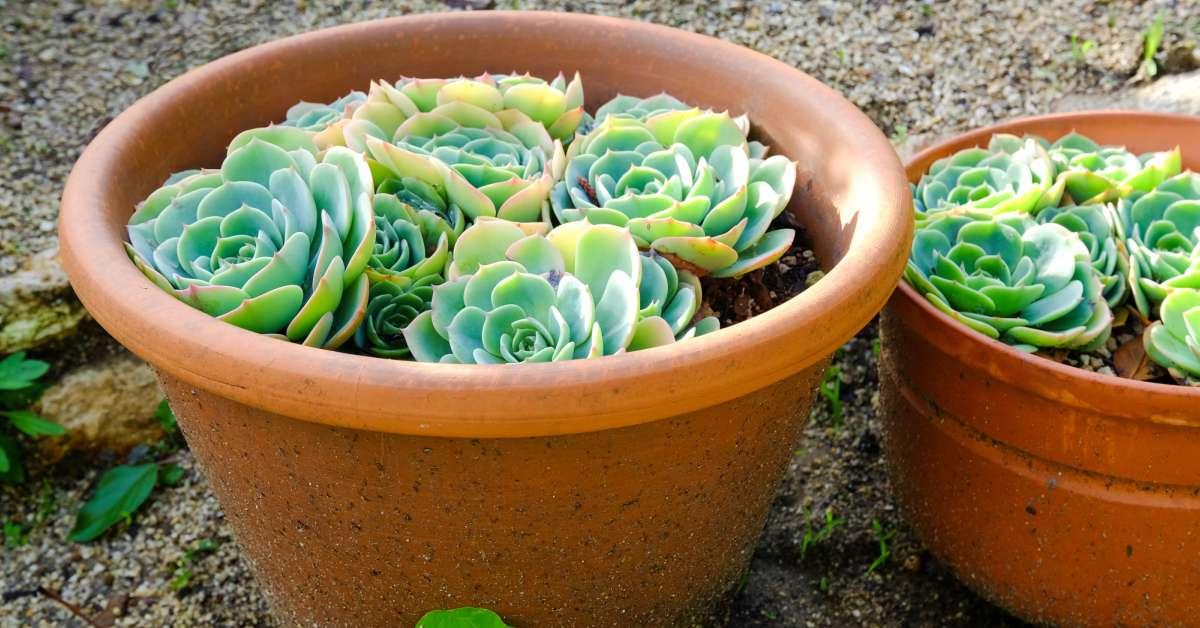Onderhoudsvriendelijke-planten