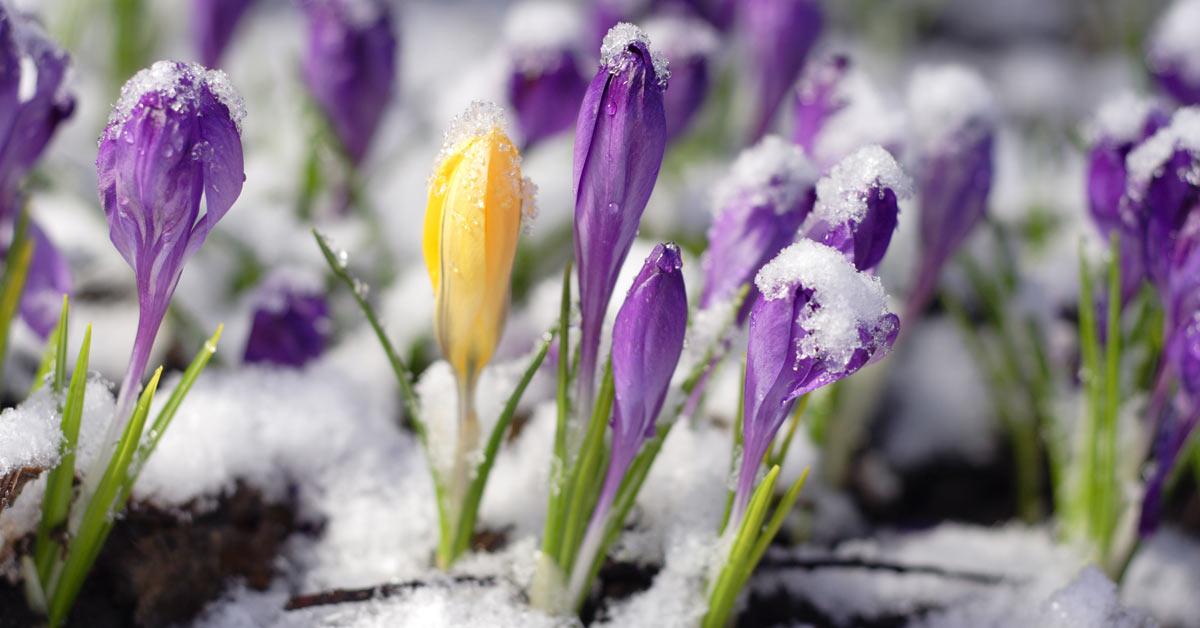 tuin-in-de-winter