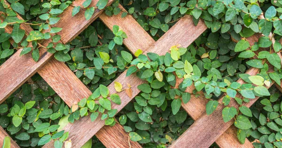 Houten-klimrek-voor-klimplanten-1