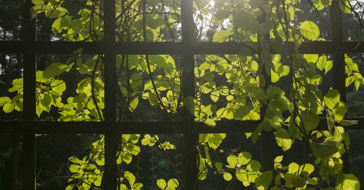 Houten klimrek voor klimplanten maken
