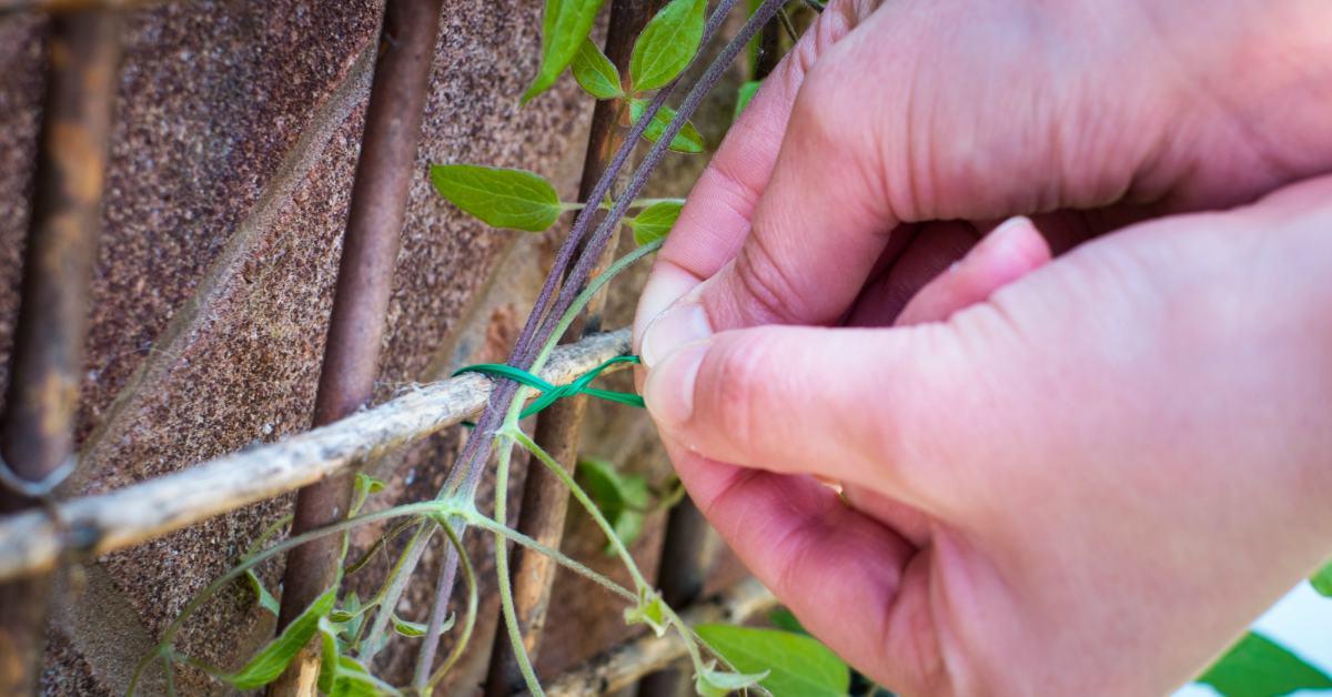 Klimplanten-bevestigen-aan-klimrek