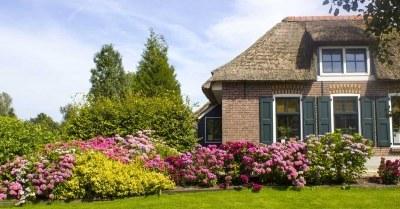 meest populaire tuinplanten van nederland