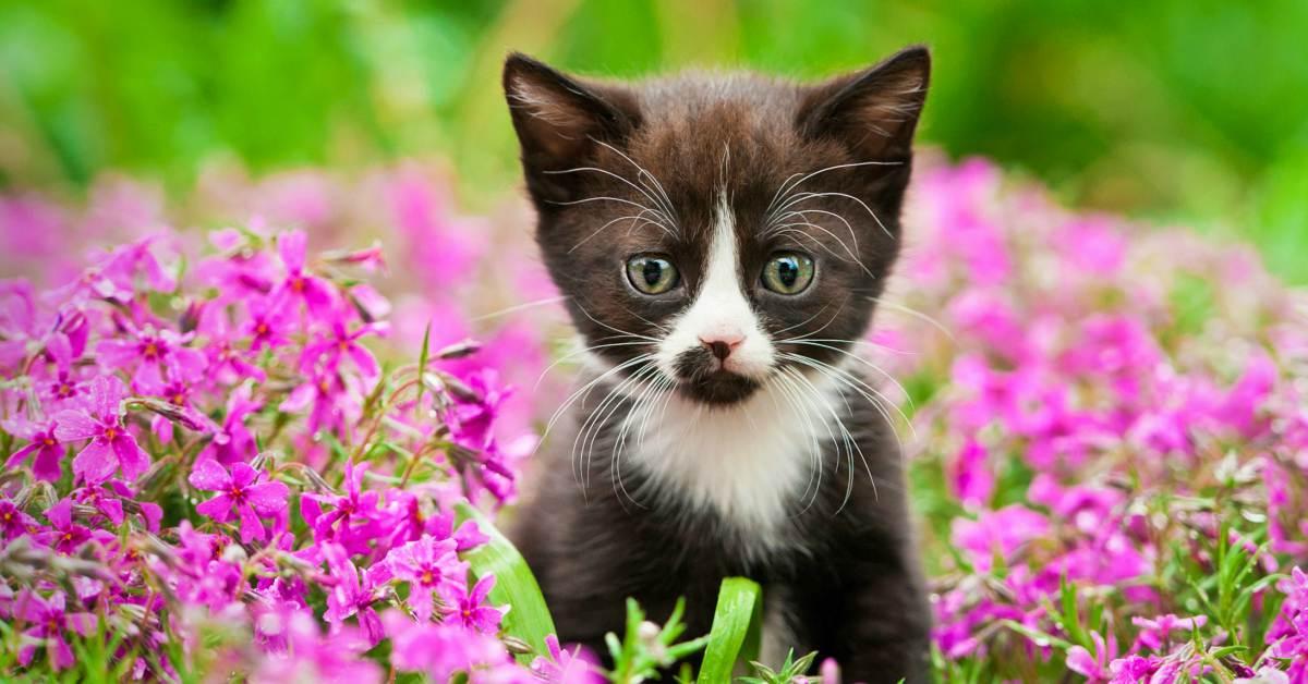 Kat in bloementuin