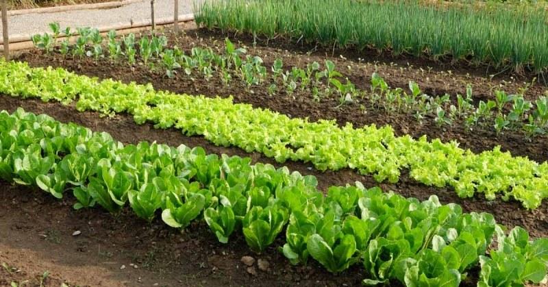 Moestuin Zelf Maken : Moestuin maken stappenplan zelf tuinieren
