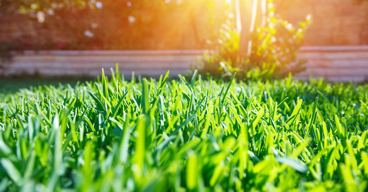 Gazon-in-voorjaar