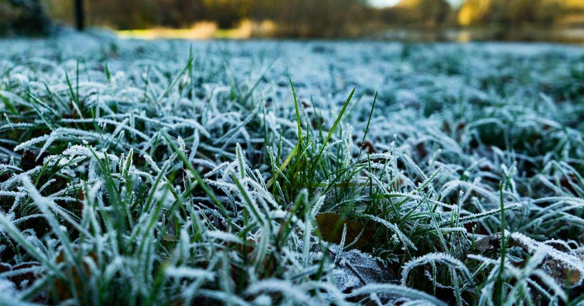 Grasmat-in-winter
