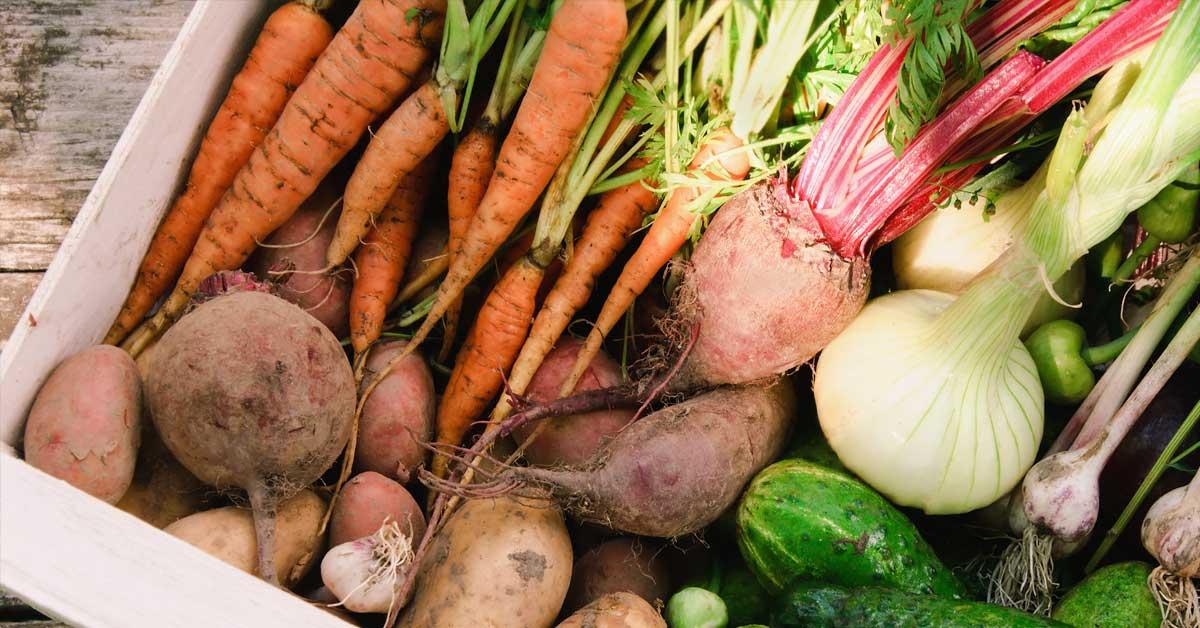 Groenten-uit-de-tuin