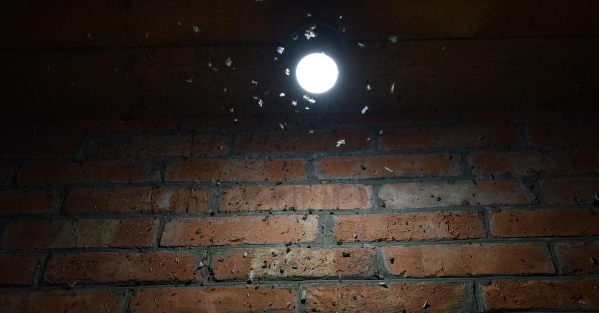 Insecten-rondom-lamp