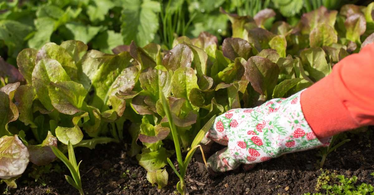 Mest Voor Tuin : De tuin bemesten in het voorjaar: zo help jij de tuin een handje