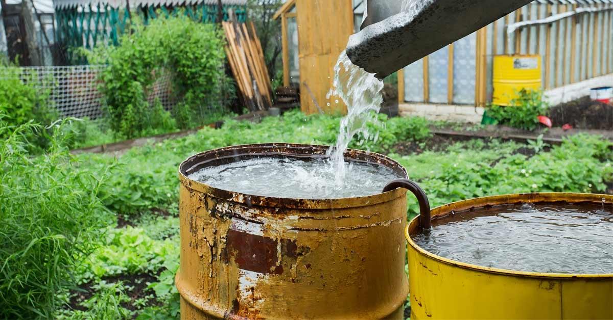 Regenwater-opvangen-voor-de-moestuin