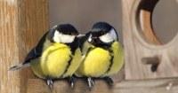 Twee-koolmeesjes-in-vogelhuisje