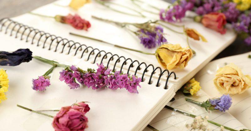 Een herbarium maken doe je met deze 5 stappen op de juiste manier - Maak een hoofdbord aan ...