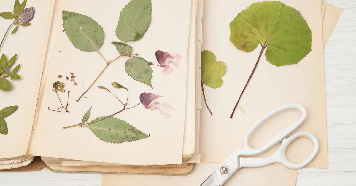 Herbarium maken