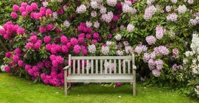 Rhododendron-met-bankje