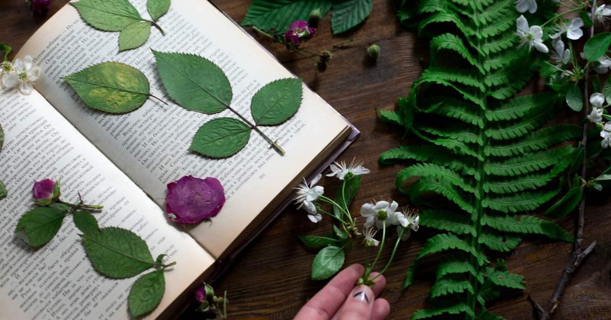 Bloemen-en-planten-drogen-druk