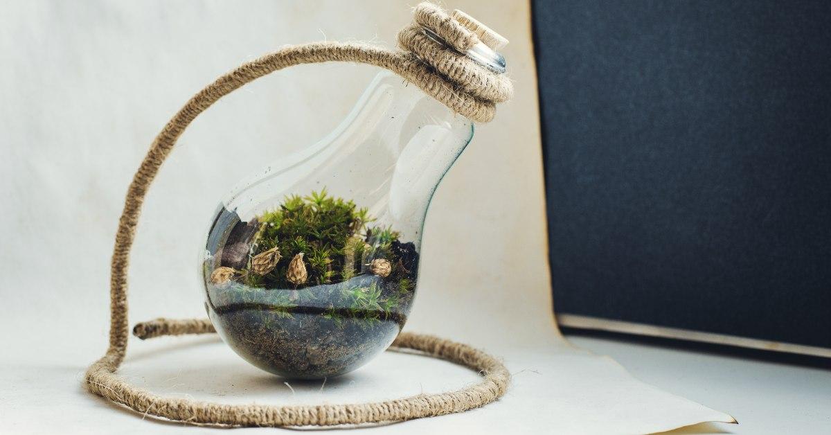 Gesloten-terrarium-