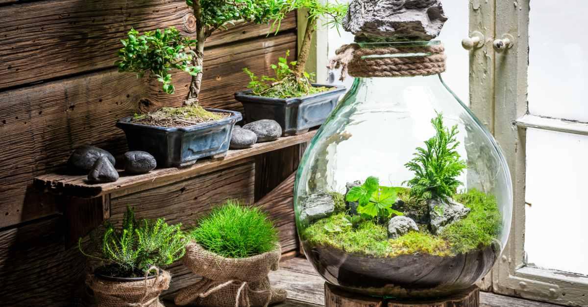 Gesloten-terrarium