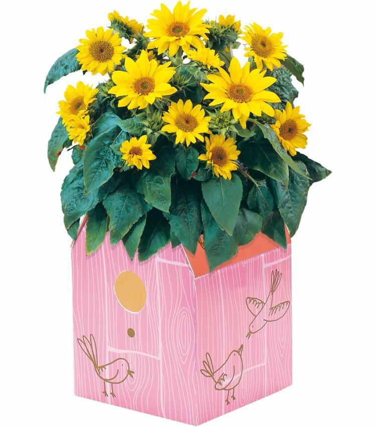 Kweekset zonnebloemen