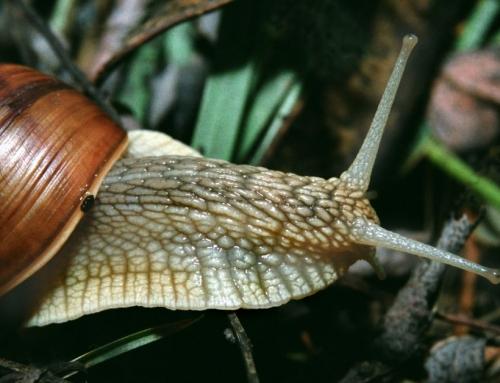 Slakken bestrijden (Ook naaktslakken)