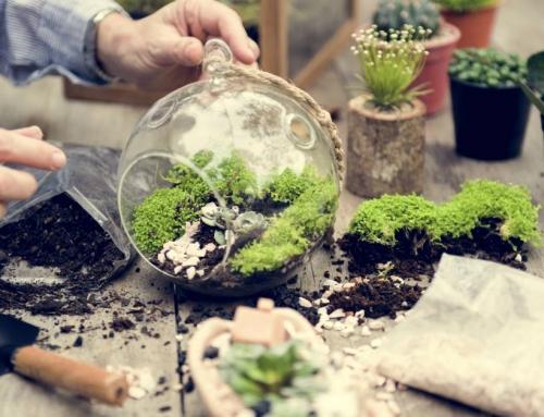 Een planten terrarium kopen of maken