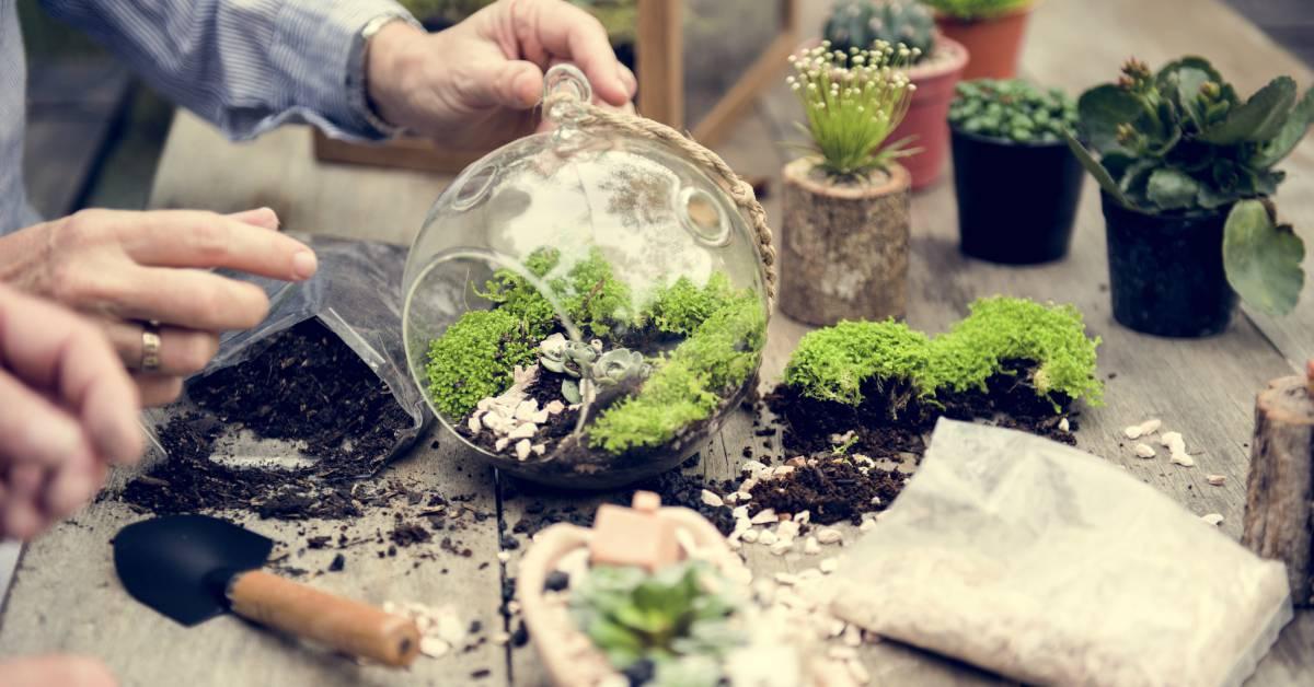 Terrarium-maken-voor-planten