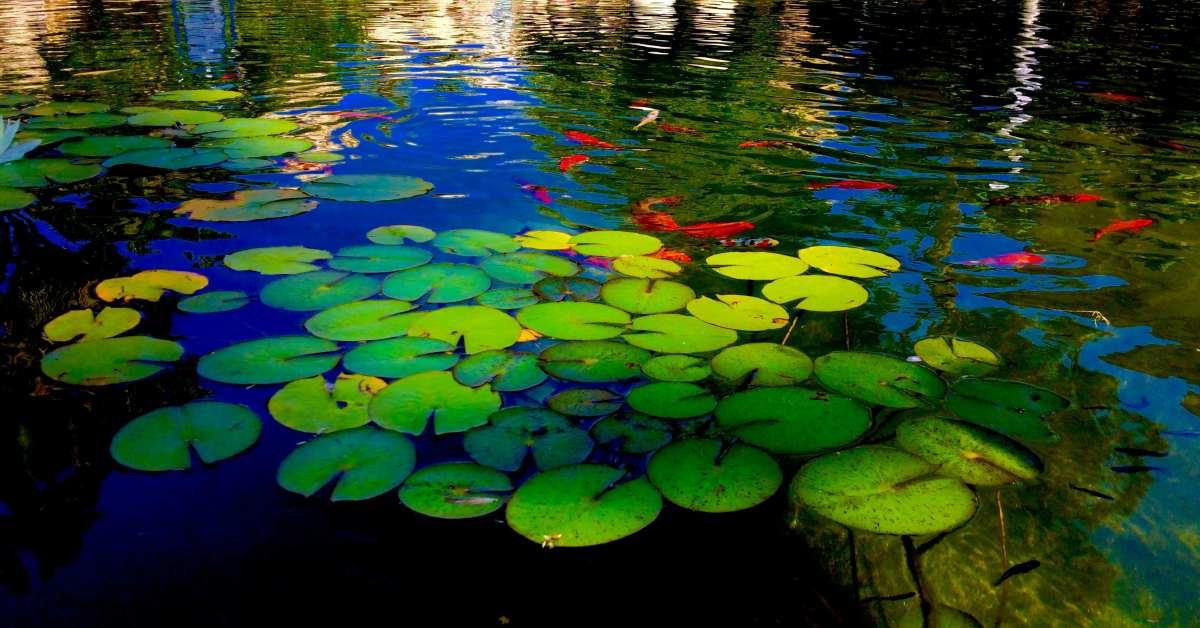 Helder-vijverwater