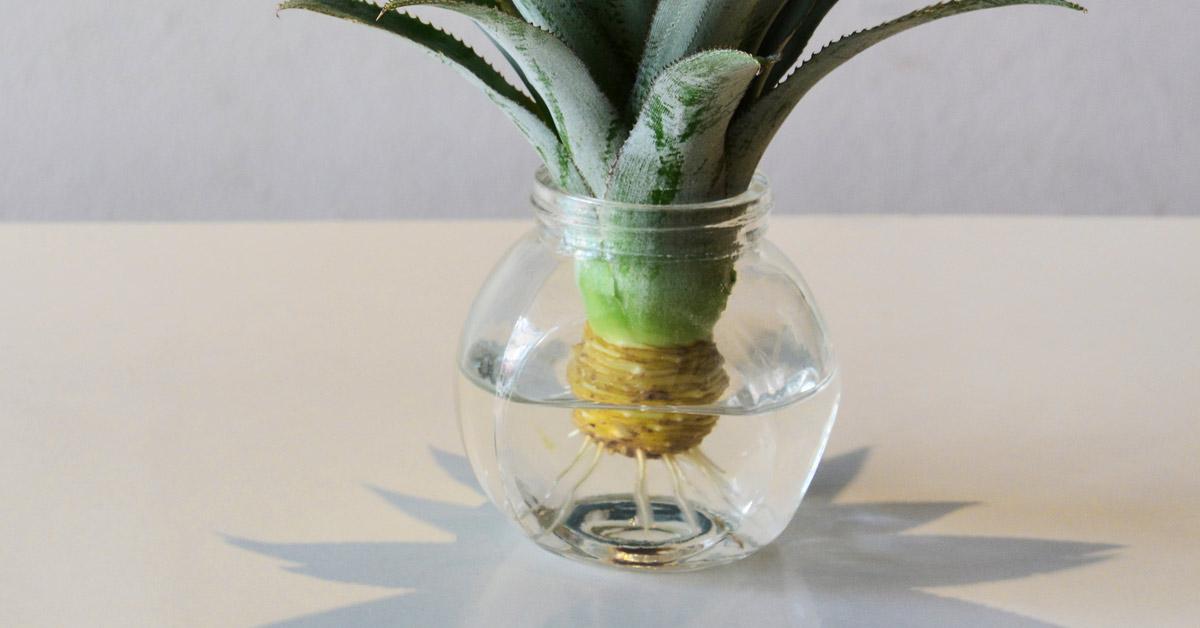 Kroon-van-ananas-in-water