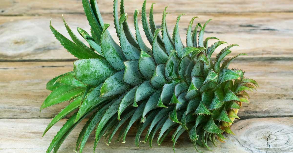 Kroon-van-een-ananas