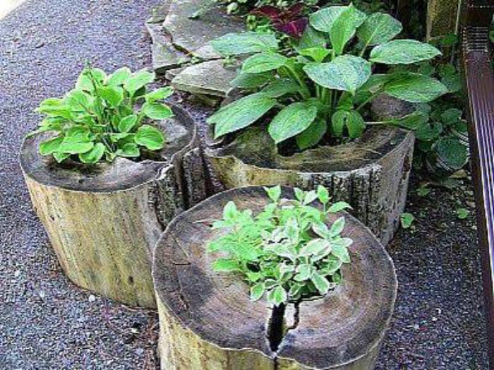Planten-in-boomstsam
