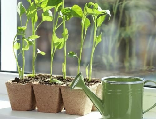 Onbezorgd De Zon Tegemoet Met Deze 10 Methoden Om Je Planten Te Verzorgen Tijdens De Vakantie