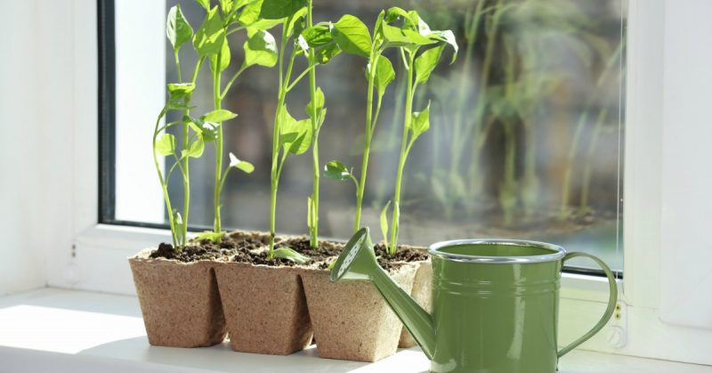 Planten-op-vensterbank