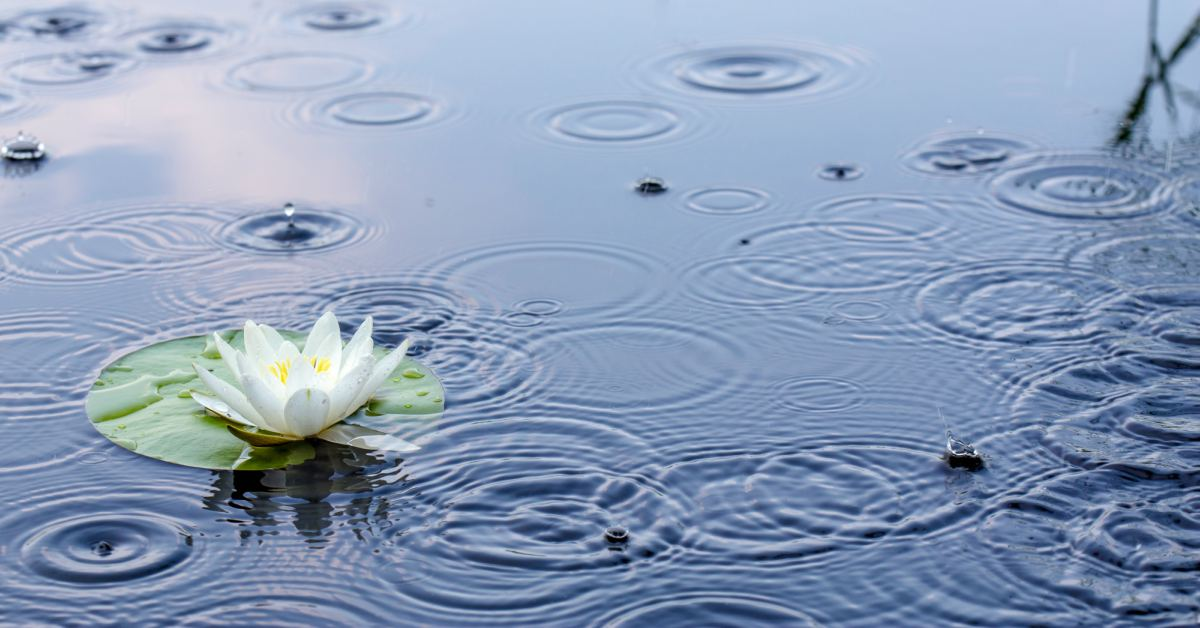 Regen-in-vijver