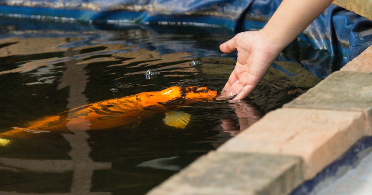 Vissen-voeren
