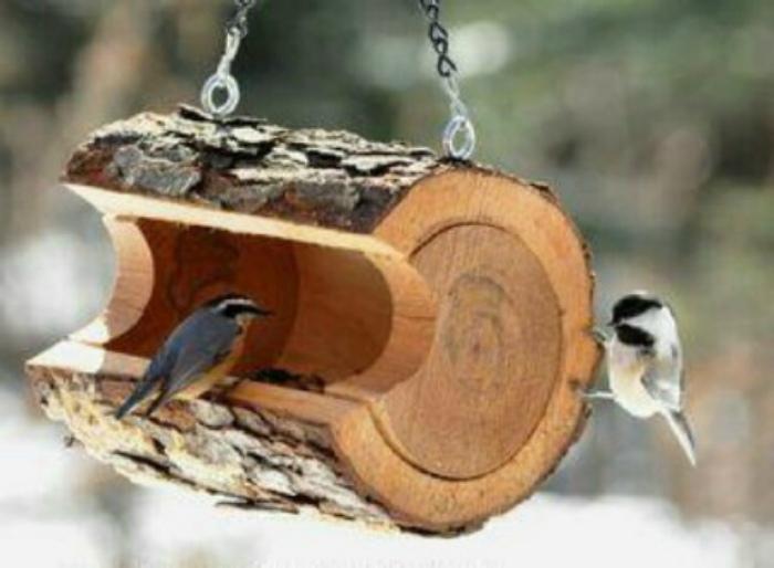 Voederbak-vogels