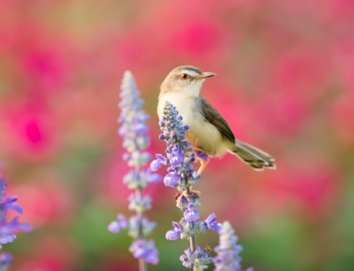 Je Moestuin Beschermen Tegen Vogels: Met Deze 5 Tips Zorg Je Voor Een Geslaagde Oogst