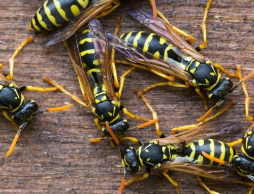 Wespen In De Tuin Bestrijden Wordt Wel Heel Makkelijk Met Deze 9 Manieren