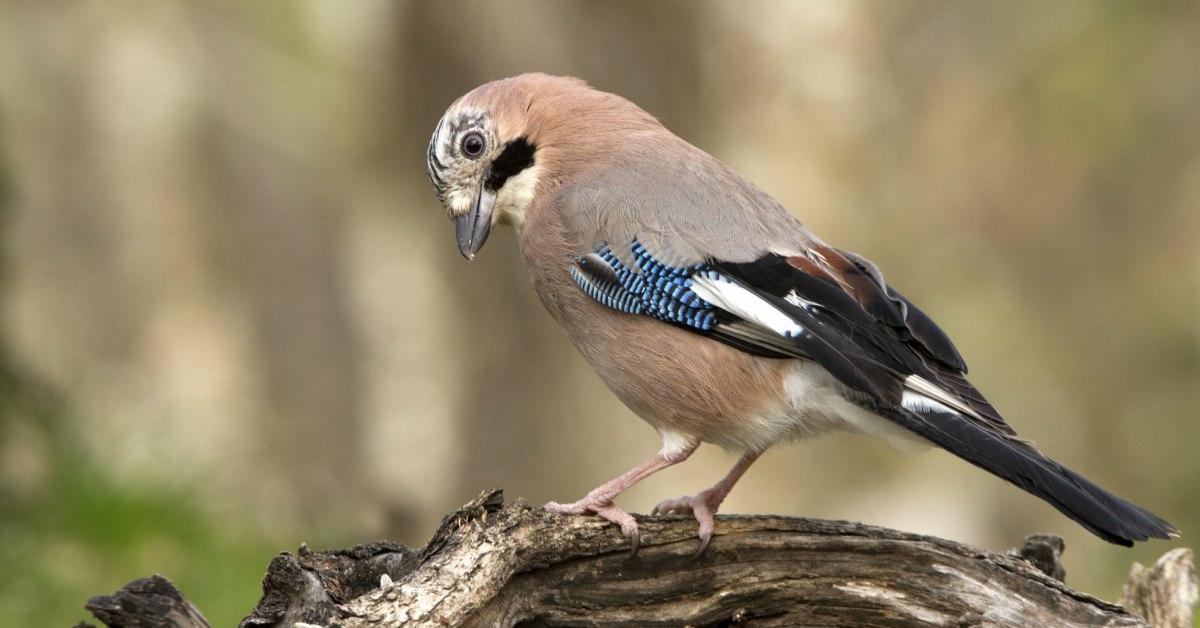 Vogels Nederland Tuin : Vogels in de tuin herkennen tuinvogels info