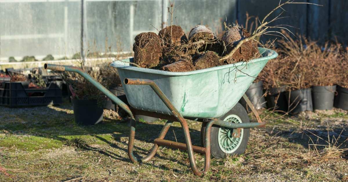 Kruiwagen met oud gewas