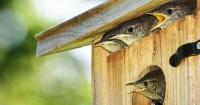 Nestkast met jonge vogels