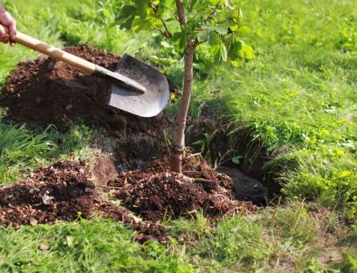 Het verplanten van je vaste planten (in de herfst)