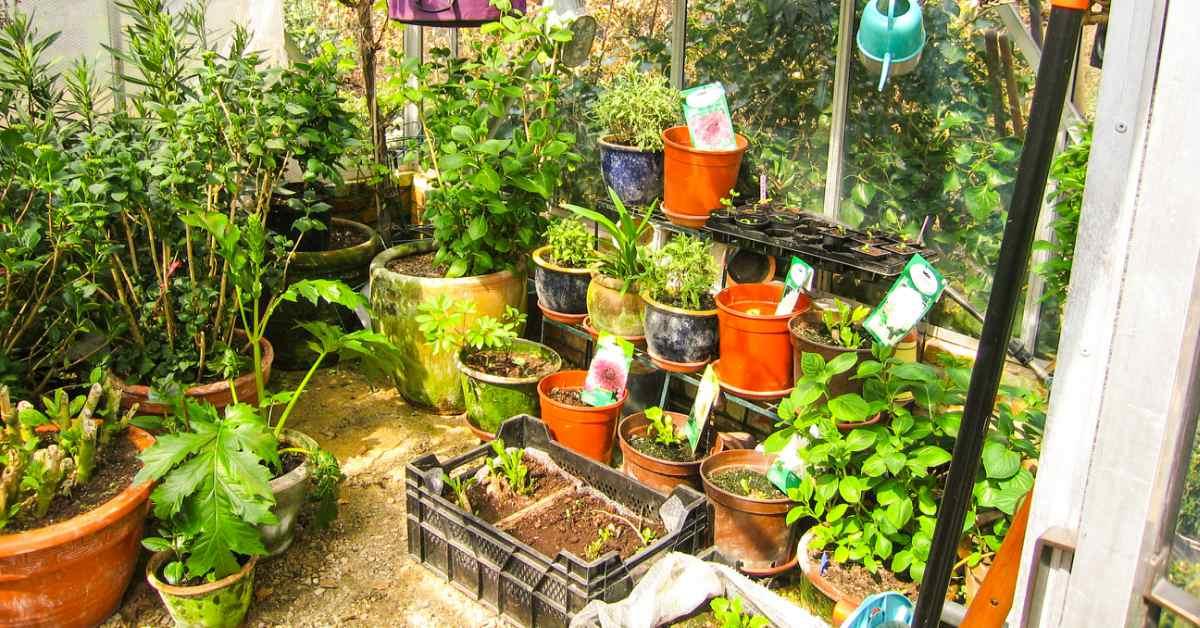 Planten overwinteren in de tuinkas