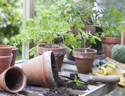 Je Tuinkas Opruimen Voor Een Goede Start Van Je Kweekseizoen