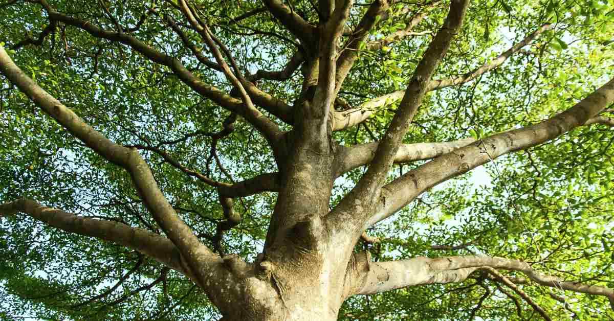 Bomen In Tuin : 8 oplossingen voor de inkijk in de tuin verminderen: welke kies jij?