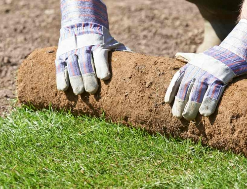 Laat Er Geen Gras Over Groeien. Hoe Graszoden Leggen Voor Een Mooie Grasmat Zorgt (10 Stappenplan)